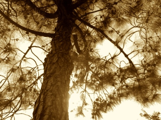 Sepia_Tone_Tree_by_Ayame_Kenoshi